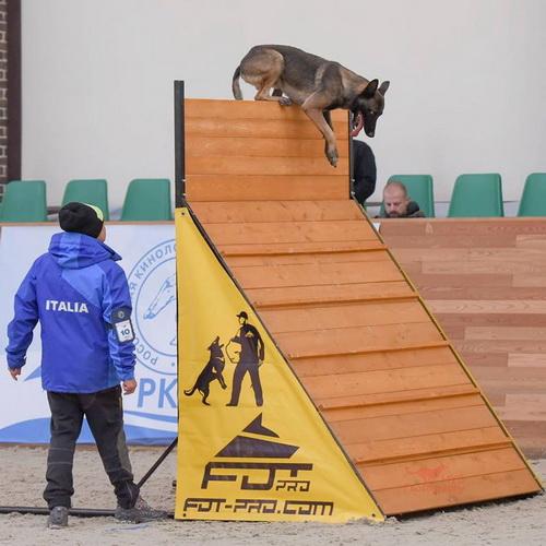 Championnat du monde fci ipo