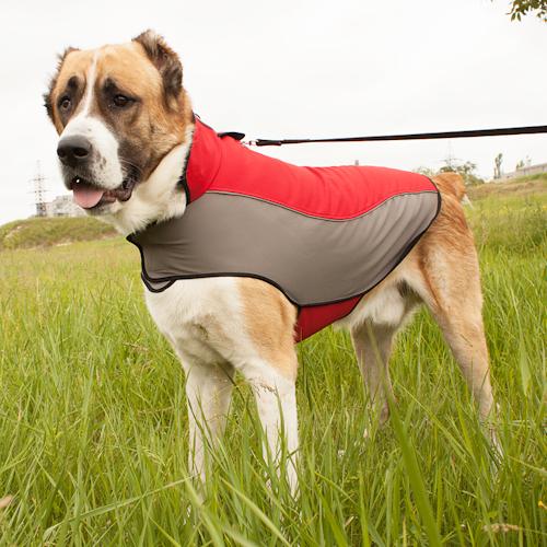 manteau pour chien cape imperm able h14. Black Bedroom Furniture Sets. Home Design Ideas