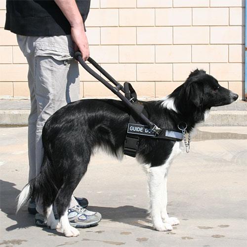 harnais pour chien guide d 39 aveugle alli fid le h20. Black Bedroom Furniture Sets. Home Design Ideas