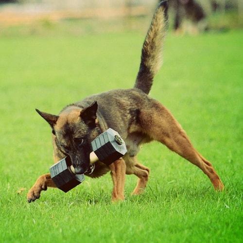 dressage chien 14
