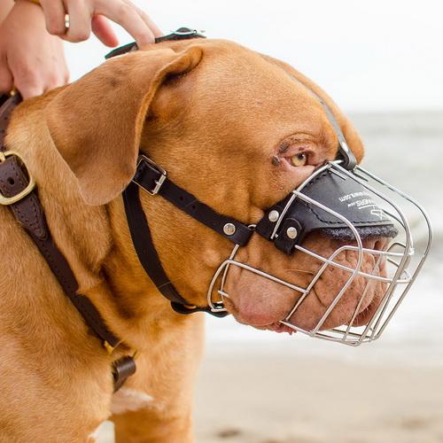 Museli re obligatoire aux chiens de toute race universelle m4 - Tout a l egout obligatoire ...