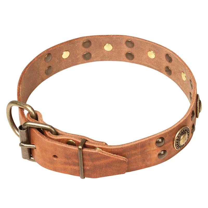 Collier chien original en cuir chevalier d 39 or c10 - Collier pour chien original ...