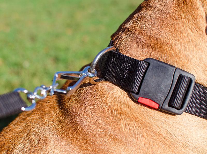 collier pour bullmastiff chien de garde ergonomie c41. Black Bedroom Furniture Sets. Home Design Ideas