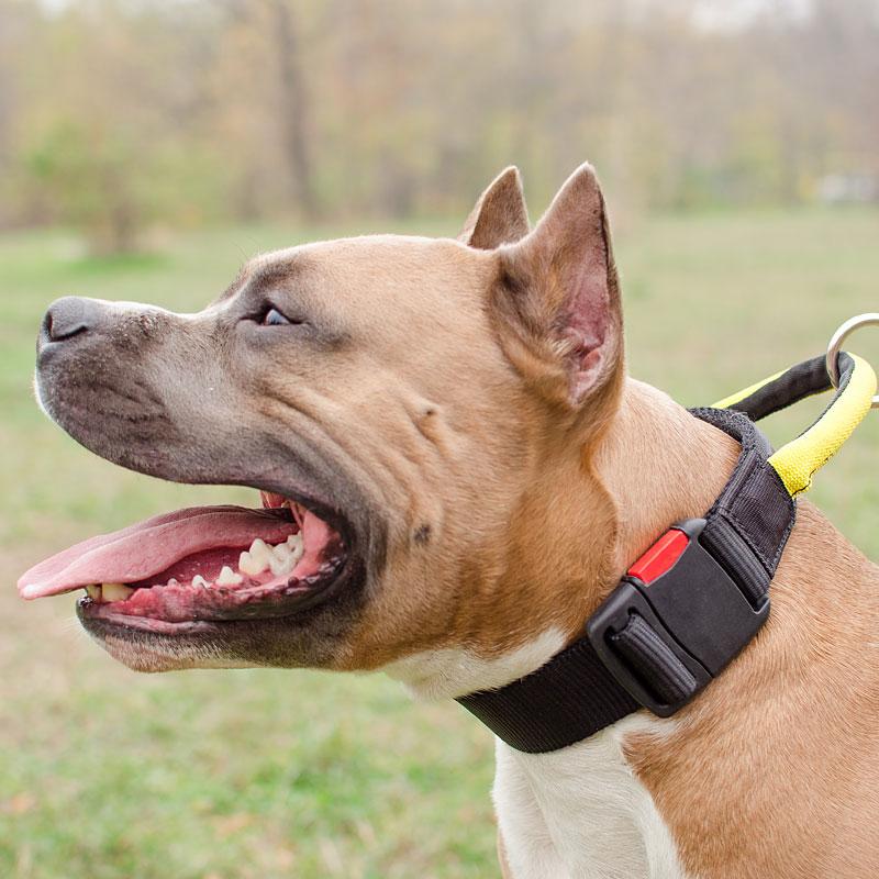 haut de gamme véritable collection entière la réputation d'abord Collier pour gros chien amstaff «Forte liaison» avec poignée