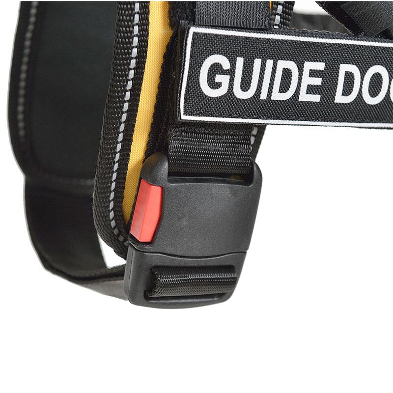 chien guide d aveugle race
