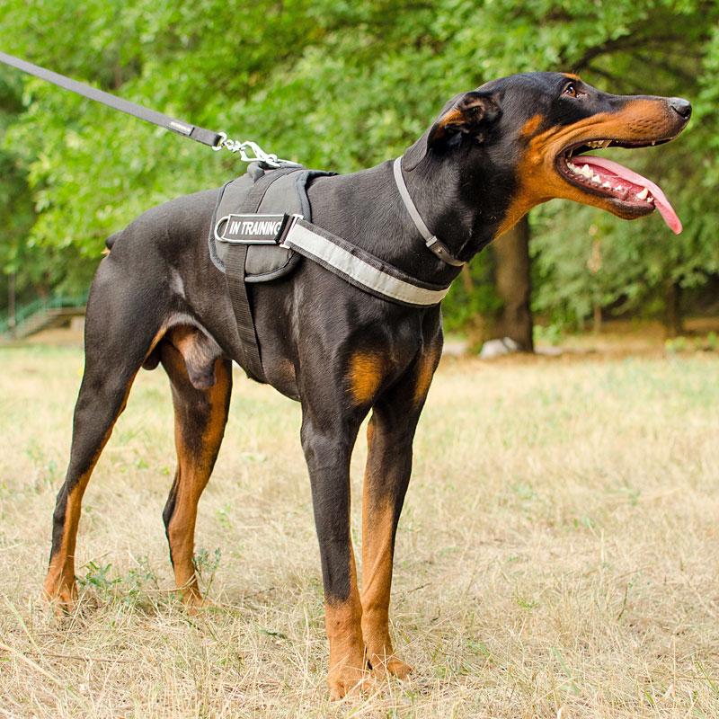 harnais nylon pour chien doberman travail dans l 39 obscurit h6p. Black Bedroom Furniture Sets. Home Design Ideas