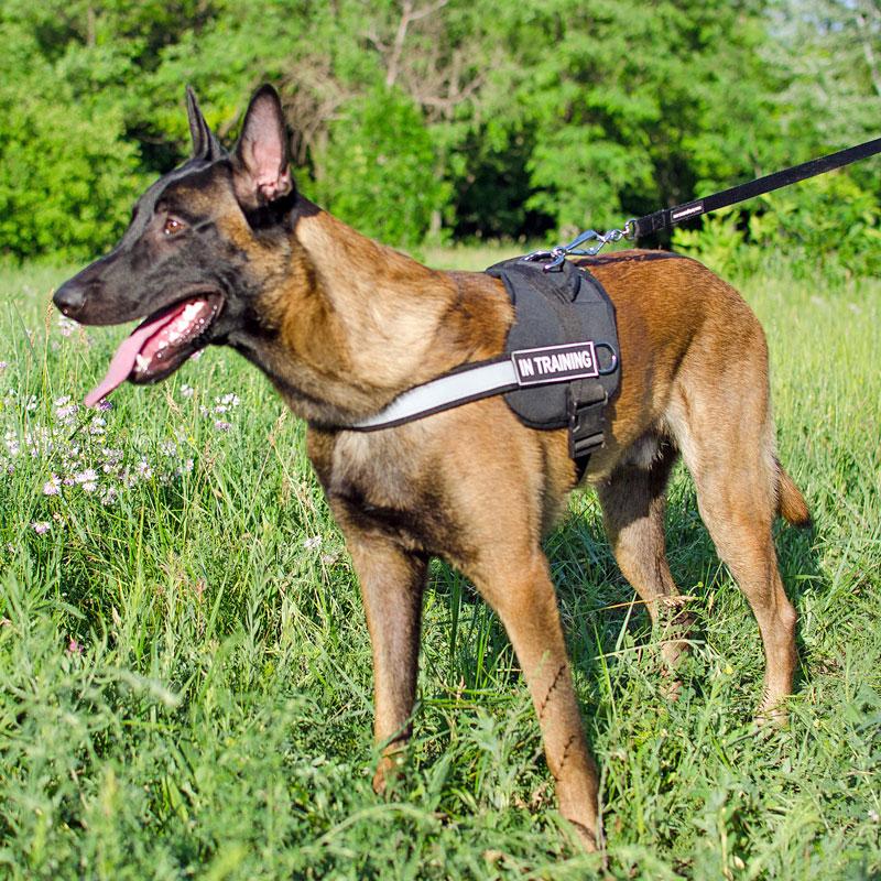 Laisse 2m pour chien de race berger malinois «Contrôle